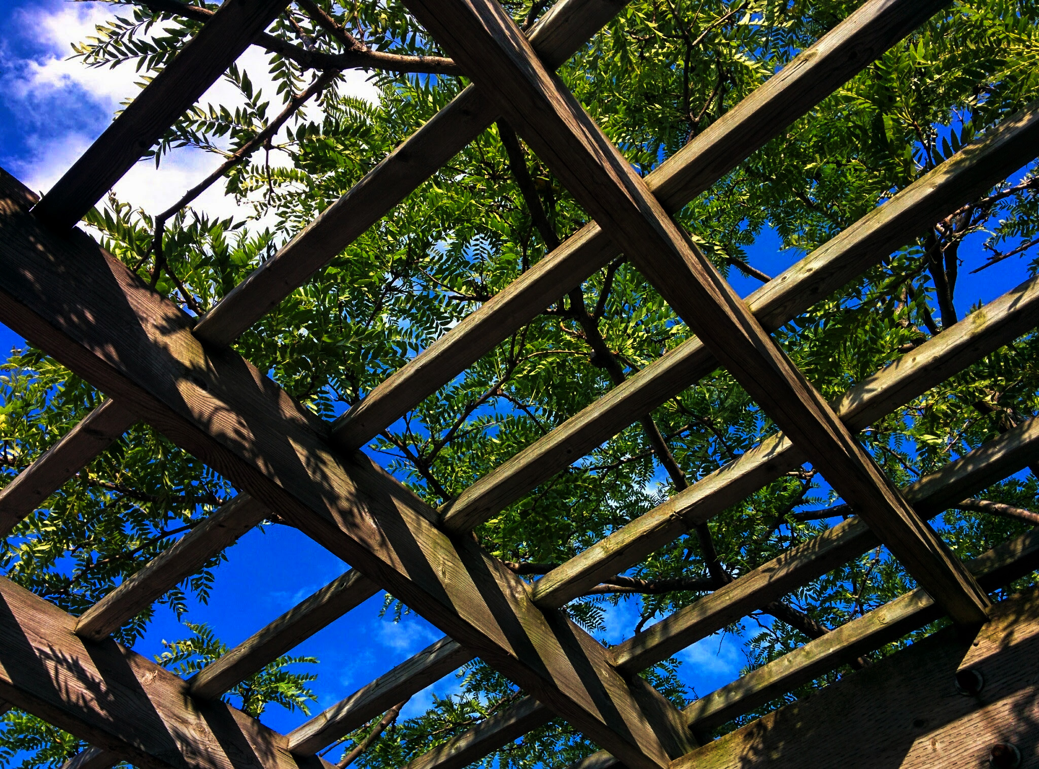 Trees above a open roof